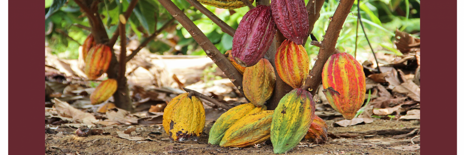 Introducing Cacao!Cacao is more than just chocolate. Try it today!Read More >