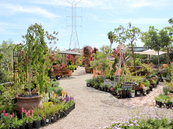 Merveilleux We Sell Waterwise Plants (and MUCH MORE!) Glendora Gardens ...