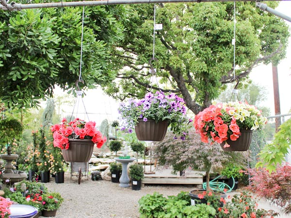 Stop By For Your Motheru0027s Day Gift At Glendora Gardens! We Have Beautiful  Hanging Baskets, Rose Trees, Hydrangeas, And So Much More!