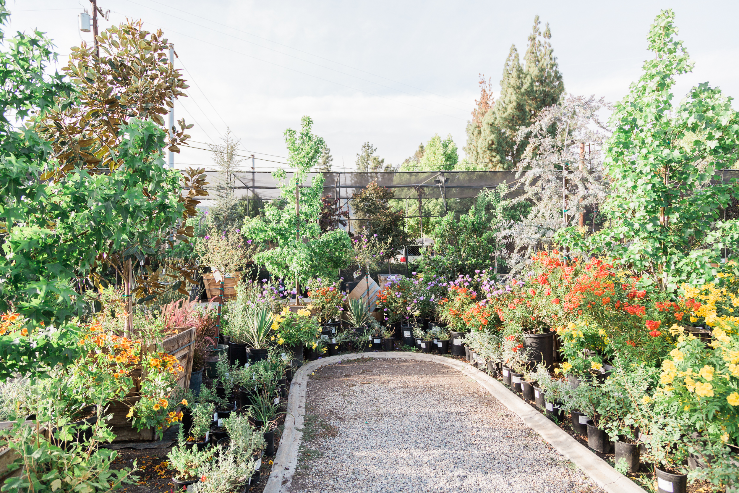 Delicieux Glendora Gardens Is Proud To Offer An Impressive Selection Of Quality  Trees. Our Varieties Are Constantly Shifting With The Seasons, So Be Sure  To Stop By ...